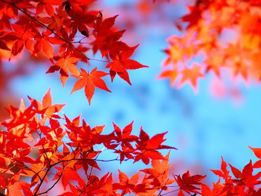 秋は出会いの季節です♡